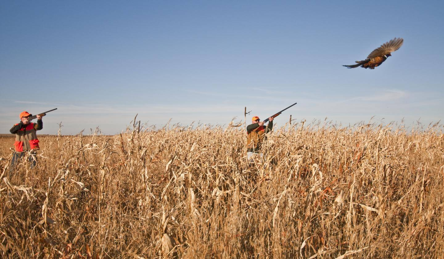 Two pheasant hunters in the field.